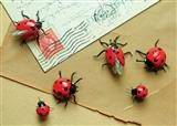 Lady Bug Magnets