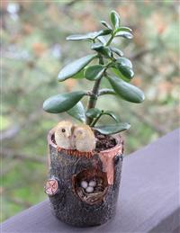 Owl's Nest Planter