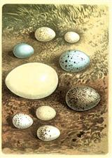 Nest Eggs (Pkg Of 6 Easter Cards)
