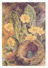 Nest With Eggs & Flowers (Pkg Of 6 Easter Cards)